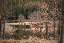 Strakovský rybník