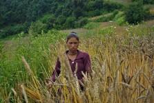 lidé zde žijí převážně ze zemědělství