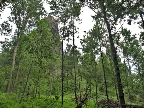les pod hradom zakrýva výhľad na hrad, ale v horúcich dňoch tiene stromov oceníte