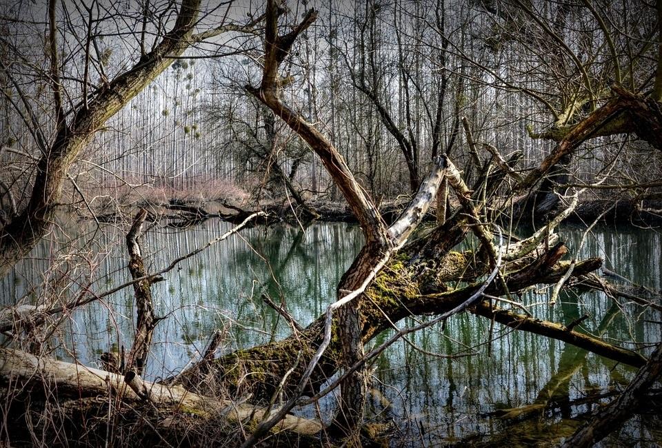 """Региональный ландшафтный парк """"Дунайские луга"""""""