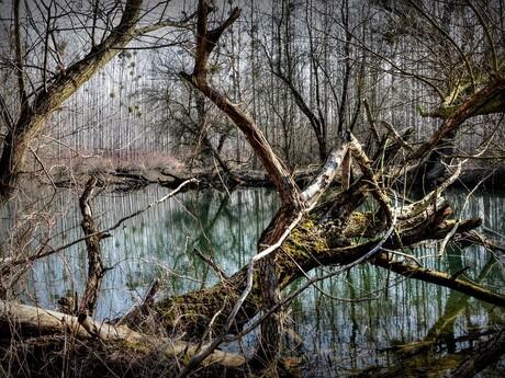 Chránená krajinná oblasť Dunajské luhy