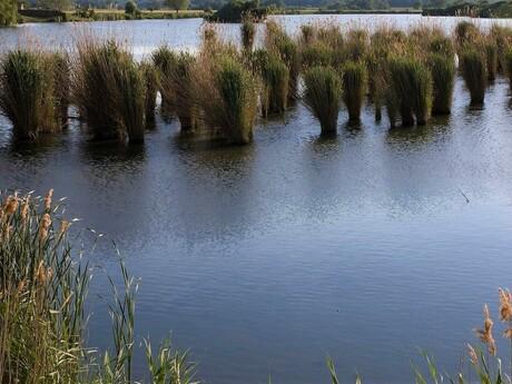 Trnavské rybníky - ilustračné foto
