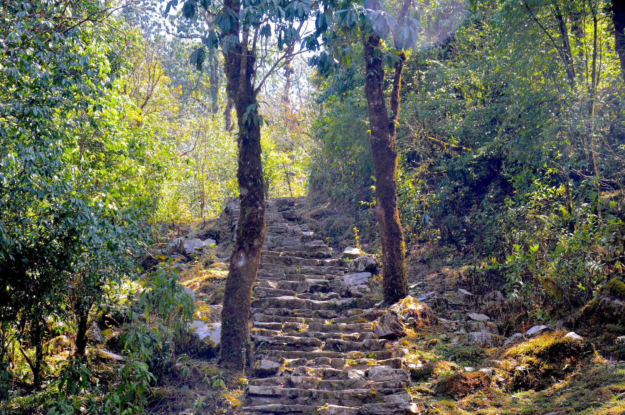 nekončící schodiště do Forest Camp