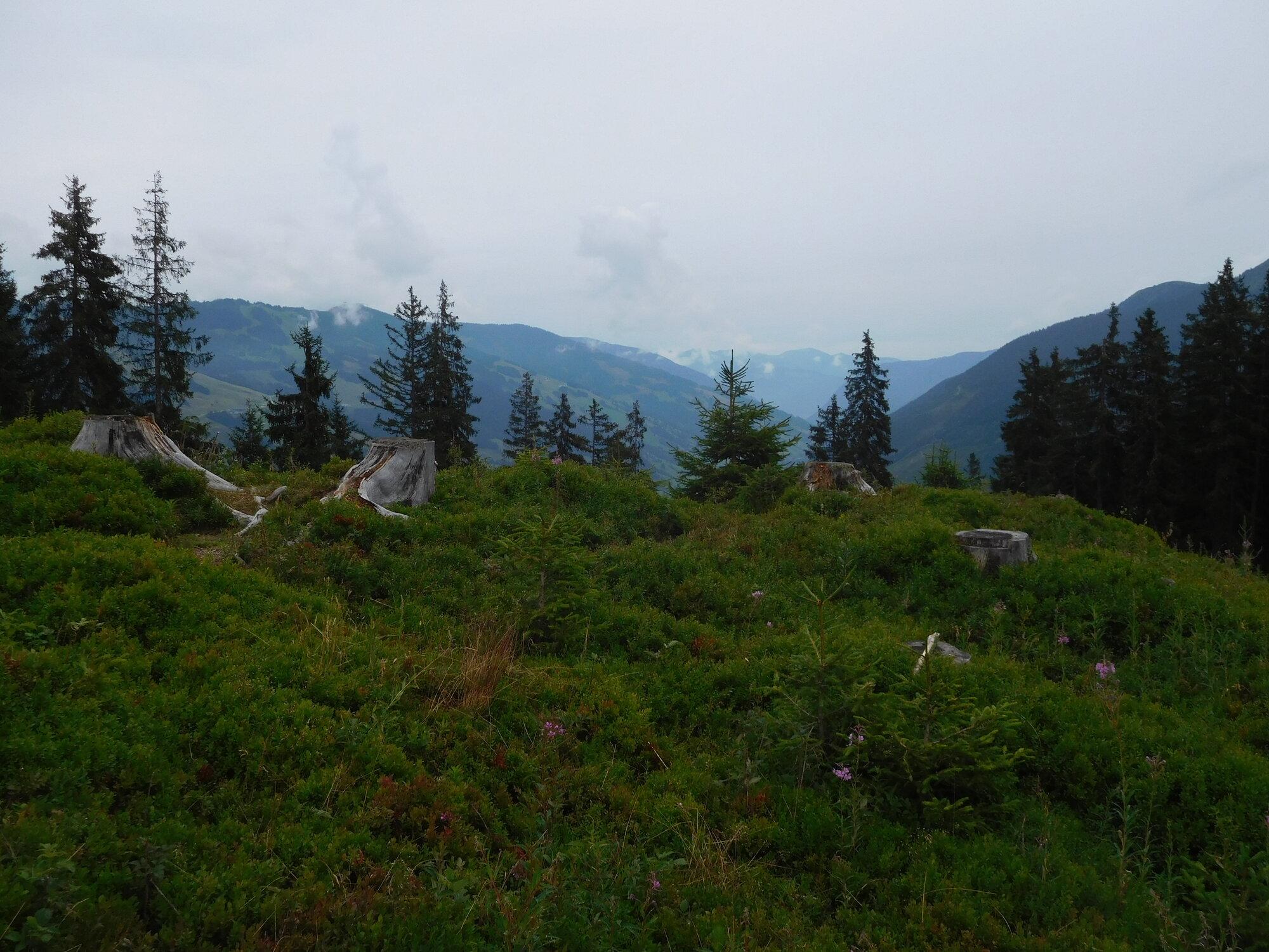 Alpenblumenweg