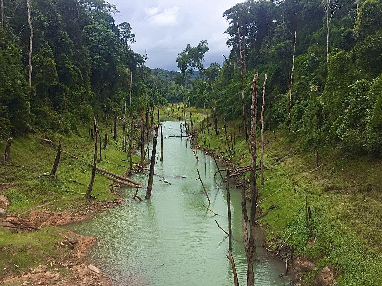 zatopené stromy v blízkosti jezera Thalang