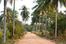 palmové háje