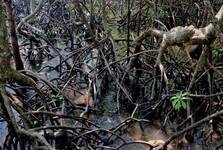 nesčetné množství kořenů