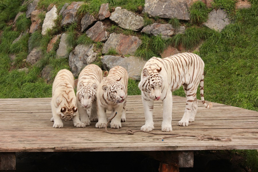 белый Зоопарк, (c) Karl Gruber