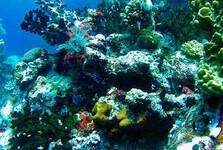 podmořský svět v národním parku