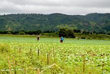 zemědělství je hlavní obživou