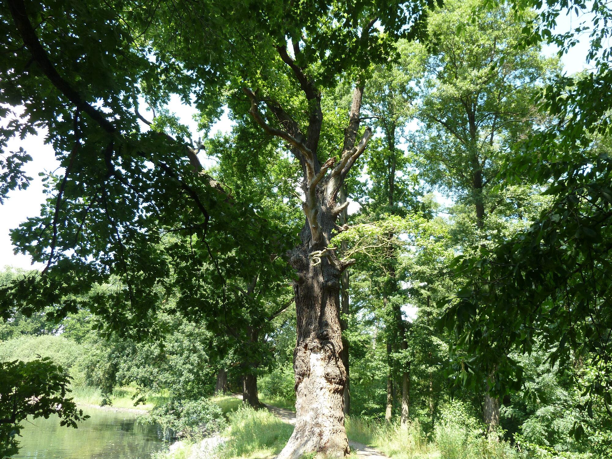 Milíčovský les a naučná stezka