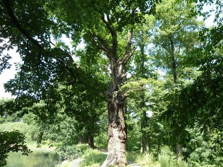 Milíčovský les a náučný chodník