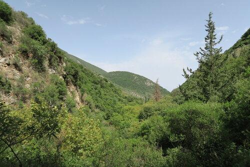 lesík pri mestečku Nidri