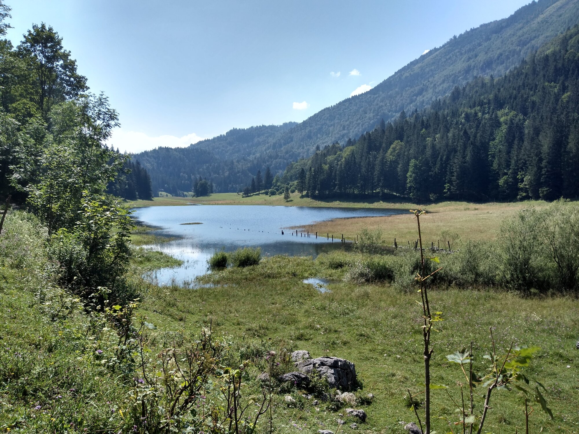 Haleswiessee