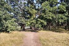 парк Радоуч