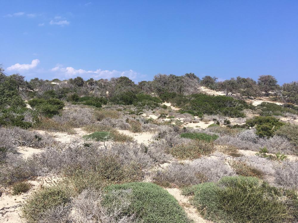 příroda na ostrově