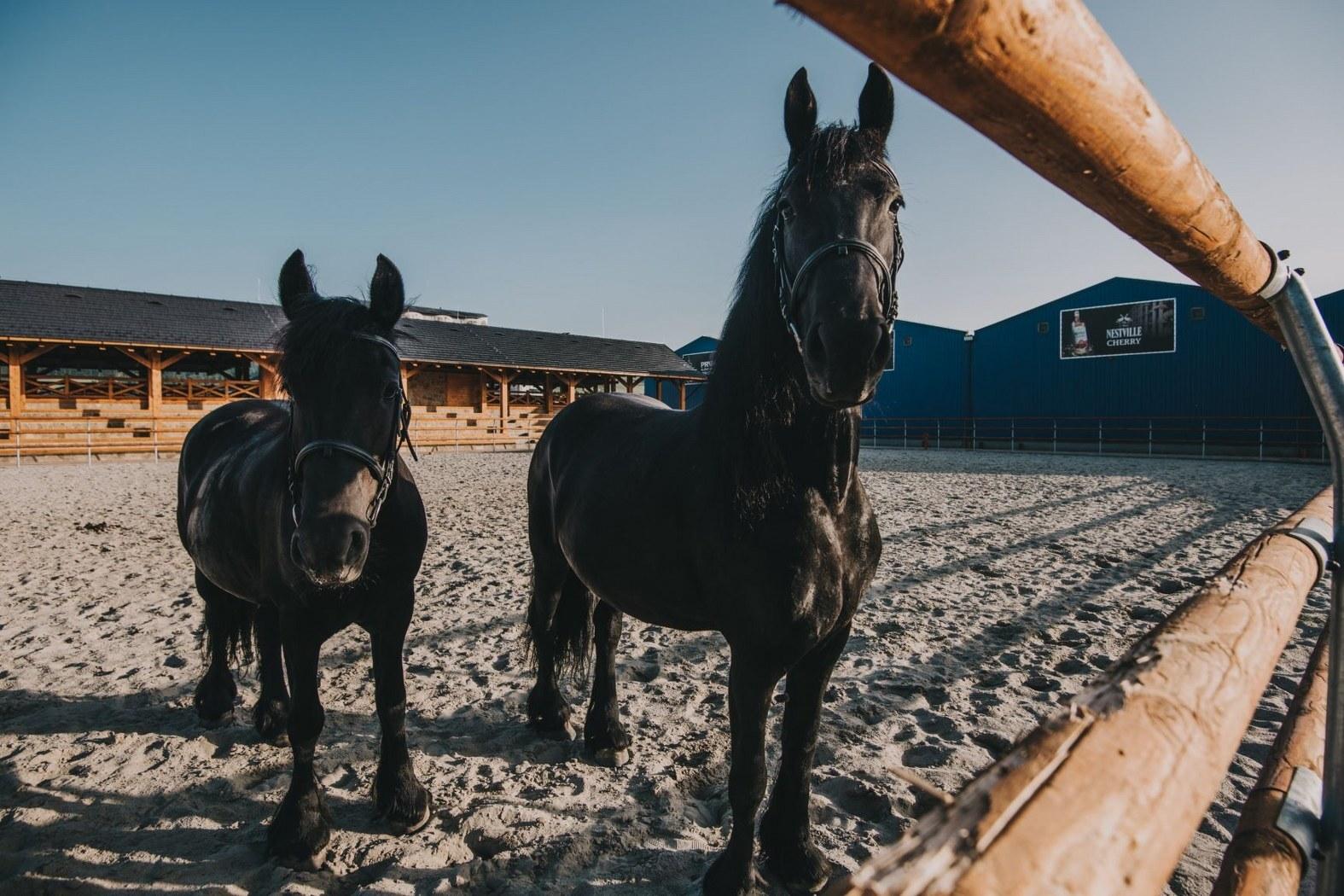 koně v jezdeckém areálu Nestville Horses