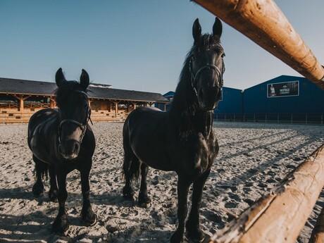Frízske kone v jazdeckom areáli Nestville Horses