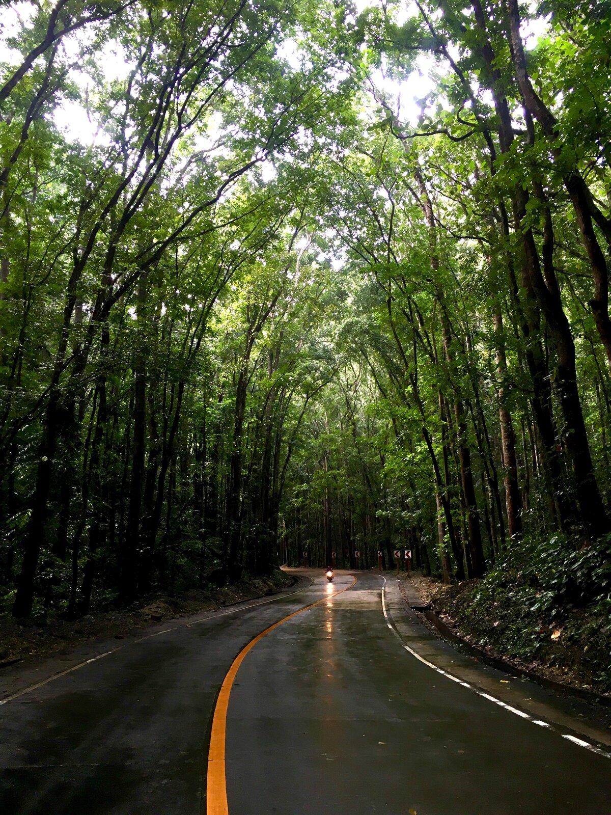 mahagonový les