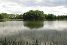 ostrůvek ve Velkém Lomnickém rybníku