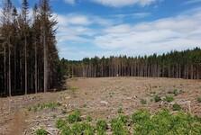 леса Тршебичска