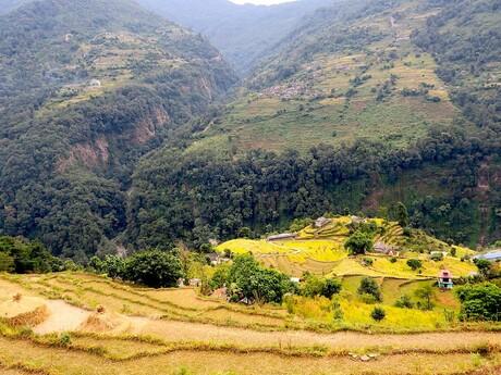 ryžové terasy