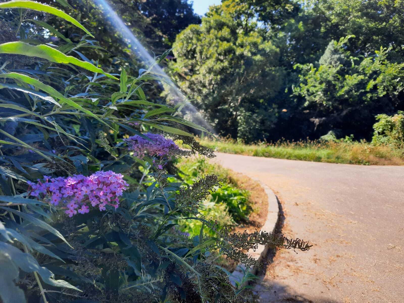 Malinovo – anglický park