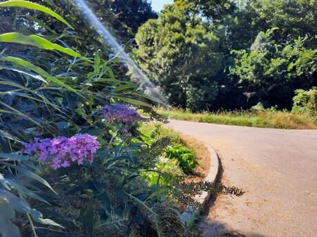 Malinovo - anglický park
