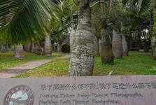 zahrada plná mohutných palmových stromů