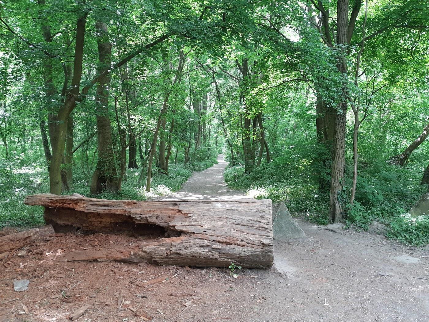 Starohájské lesy