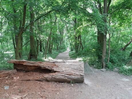 Starohájske lesy (presnejšie Lesík Zrkadlový háj)