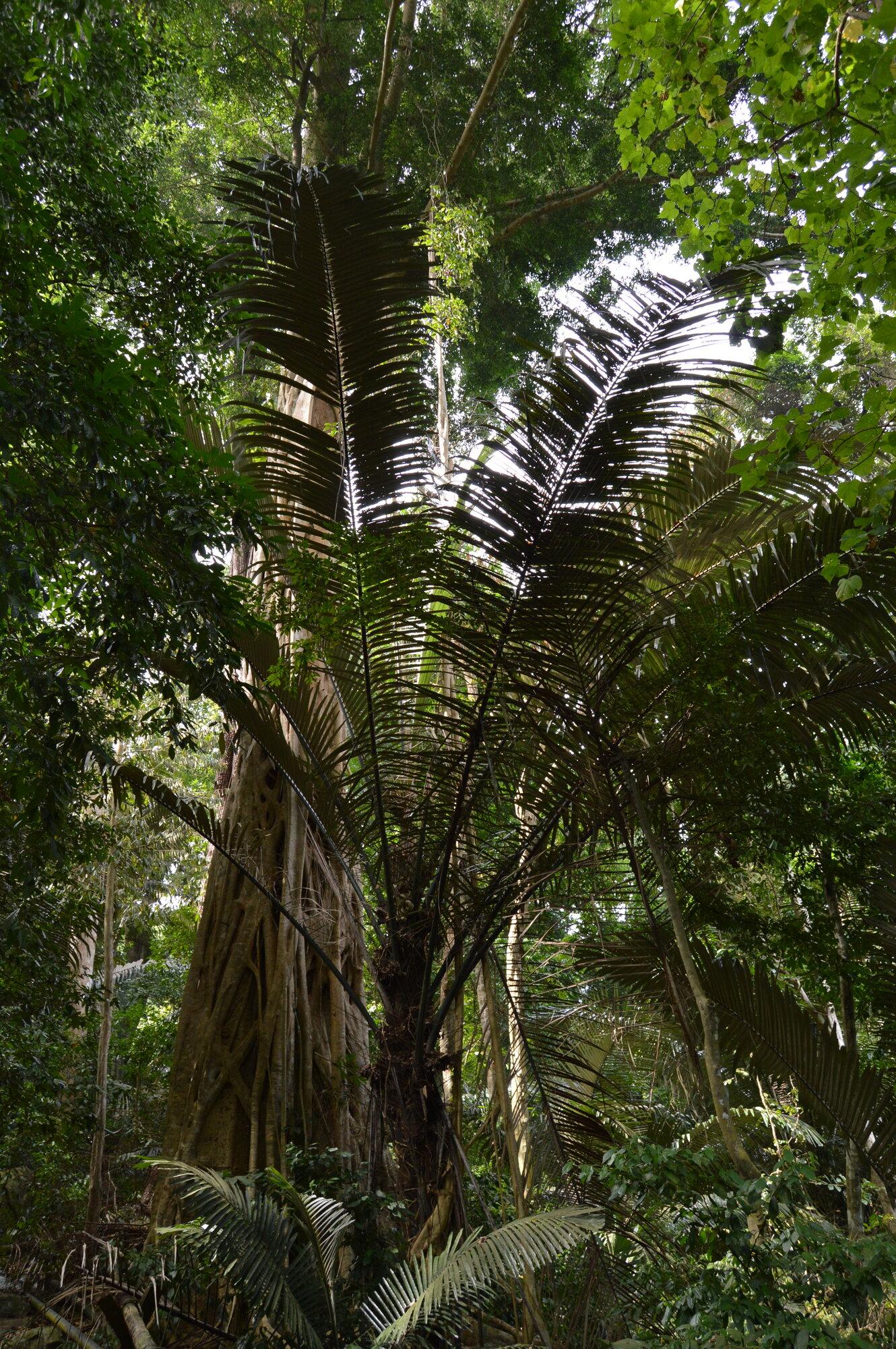 trek džunglí