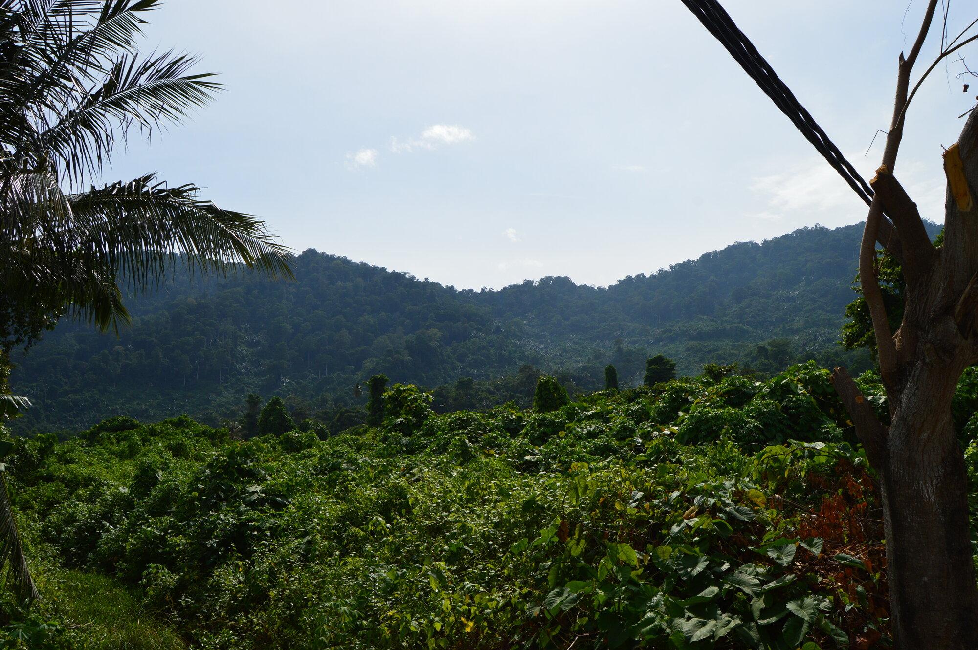 výhledy na tropický deštný prales