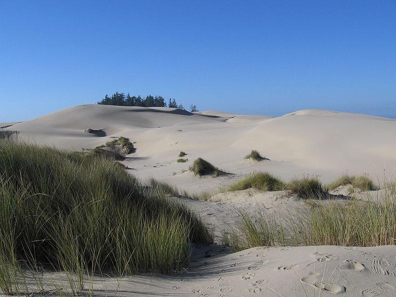 Siuslaw National Forest, písečné duny