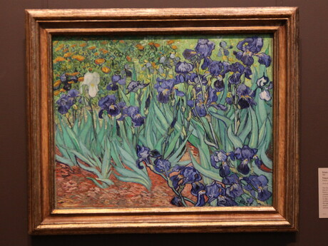Kosatce od Van Gogha
