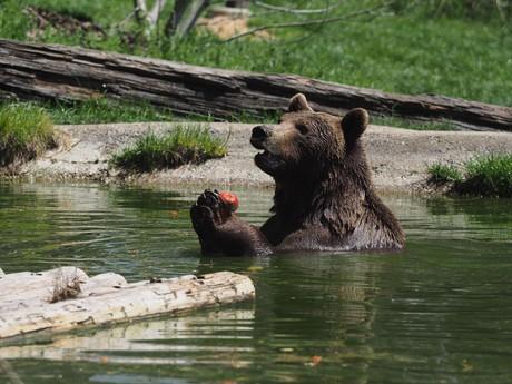 Medvede v Arbesbachu, (c) www.baerenwald.at