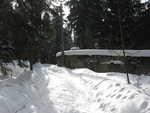 sáňkařská dráha schovaná v lese