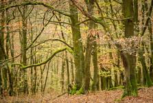 большинство лесов лиственные