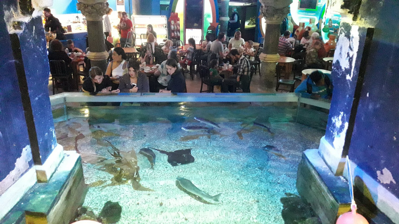 Brightonské akvárium (Sea Life Brighton)
