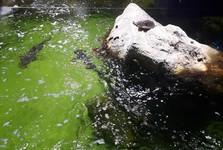 Брайтонский аквариум (Sea Life Brighton)