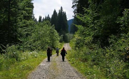 Подъездная дорога к Василовской Голи