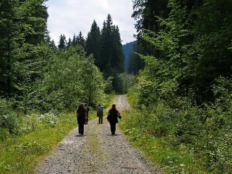 Prístupová cesta k Vasiľovskej holi