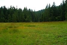 Травы и леса в окрестностях Пухмаерова озера