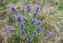 Флора в окрестностях Пухмаерова озера