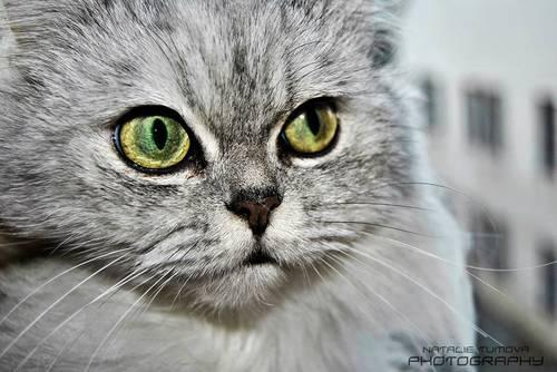 kočka seznamovací profil randění s poradcem