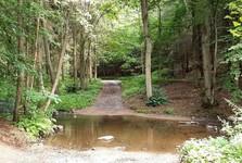 forest pathways around the Mnichovka creek