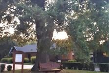 Veľký Meder - dub, symbol mesta
