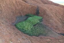 i na vrcholu Uluru se najdou zelená místa