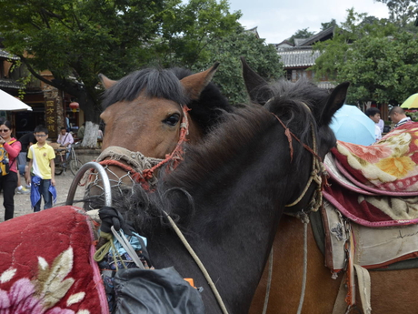 лошади, ожидающие на площади