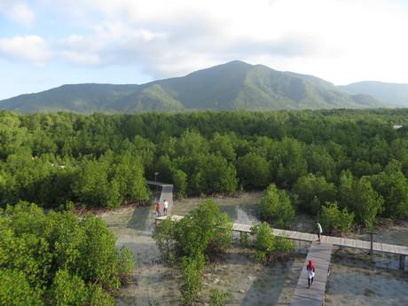 mangrovníková stezka na západě ostrova Karimun